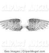 Illustration Vector of a Coloring Page of Two Open Feathered Wings, Spread over White by AtStockIllustration